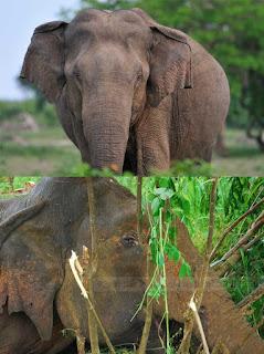 Elephant Corridor Hotel in Sigiriya