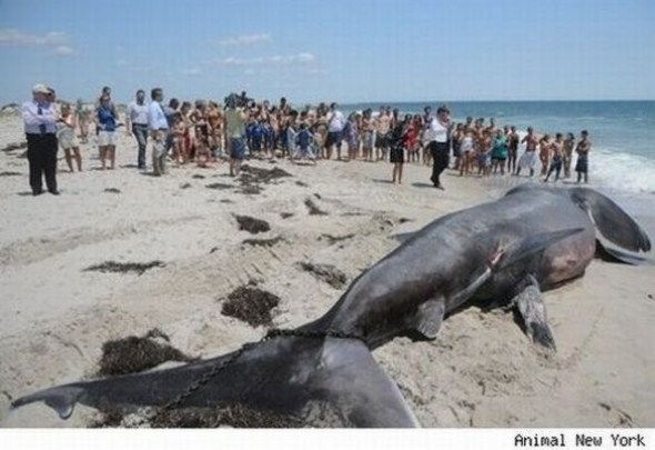 World 39 s most extraordinary and biggest fish somethin bizarre for Biggest fish in the world