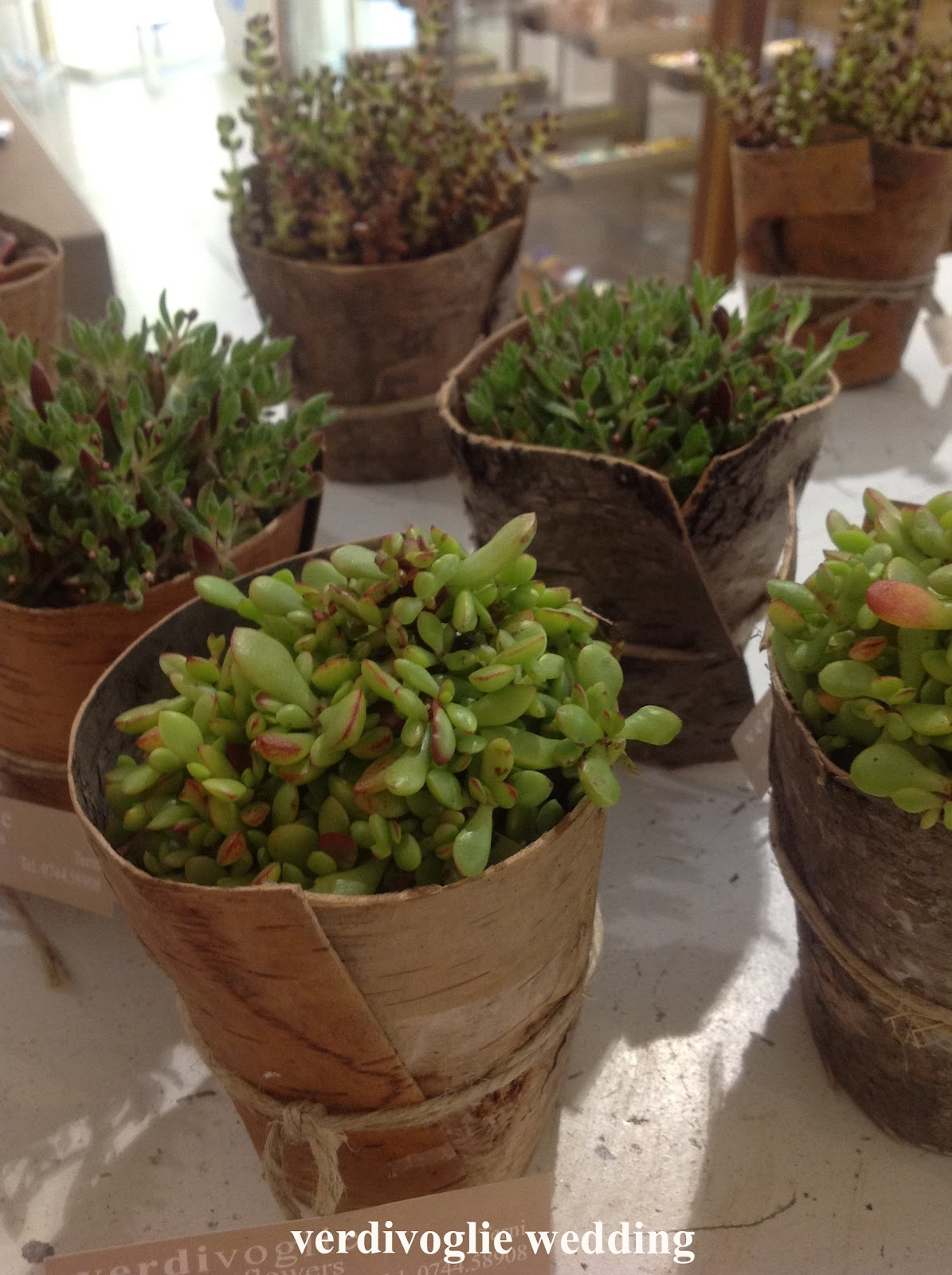 Un giorno di festa non solo wedding bacche rami for Solo piante