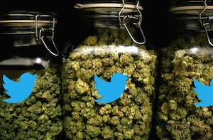 Twitter on Weed