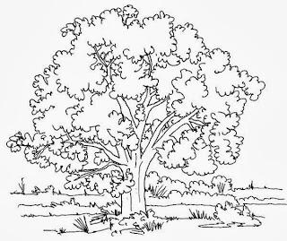 malvorlagen kostenlos bäume - Baum 151 (kostenlose Malvorlagen und Ausmalbilder auf
