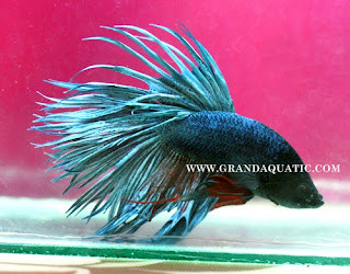 Ornamental Fish Distributors