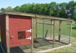 contoh reban ayam , burung dan arnab