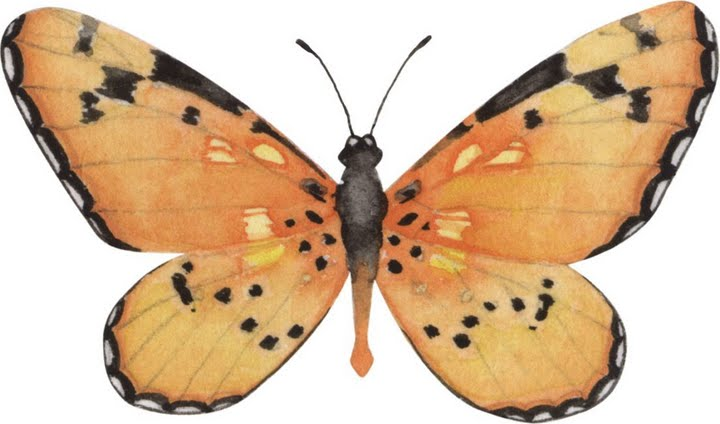 PAPEL DE CARTA Papel de mariposas para trabajos de scrapbooking