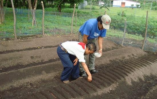 Que significa soñar con sembrar