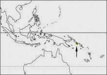 Roviana rail Hypotaenidia rovianae