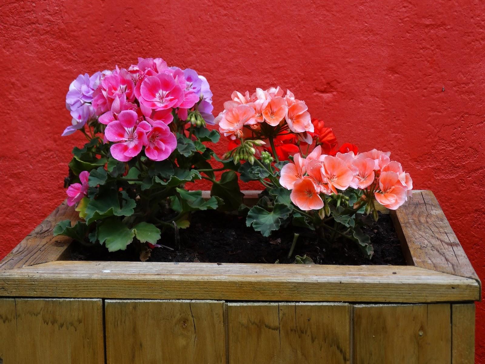 Как нарисовать цветок на заборе краской