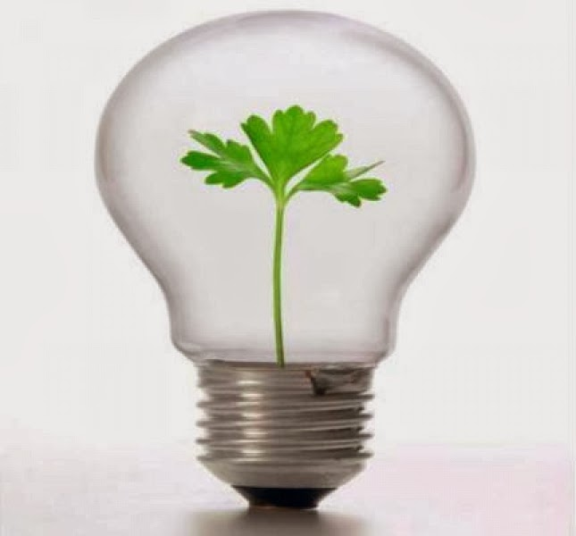 Surgimiento de emprendimientos sociales en las empresas