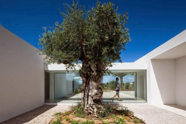 tree decoration design idea Modern House with Pool in Tavira