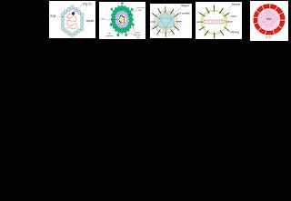 Obat Herbal Mengobati Hepatitis A , B , C ,D dan E