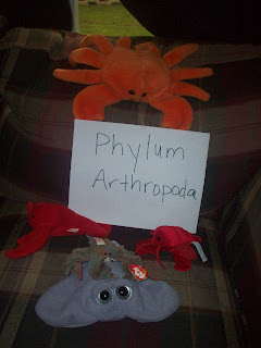 Homeschool Phylum Arthropoda