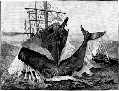 steamship, 3-mast, sperm whale