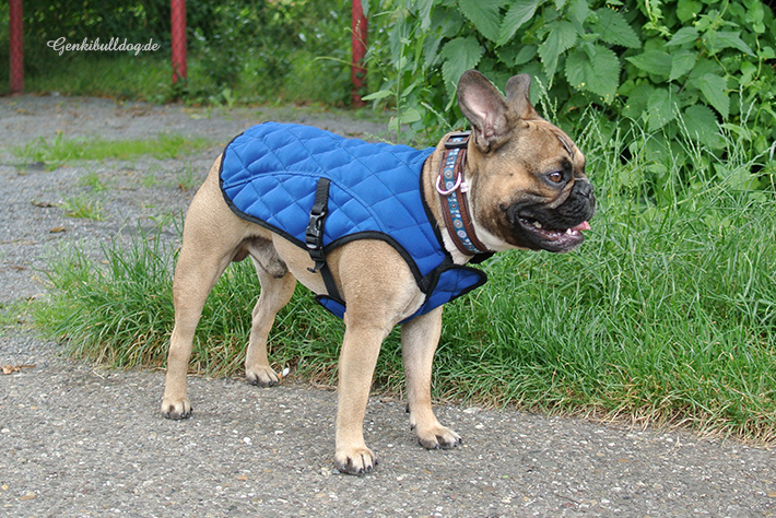 Aqua Coolkeeper Hundekühljacke im Test