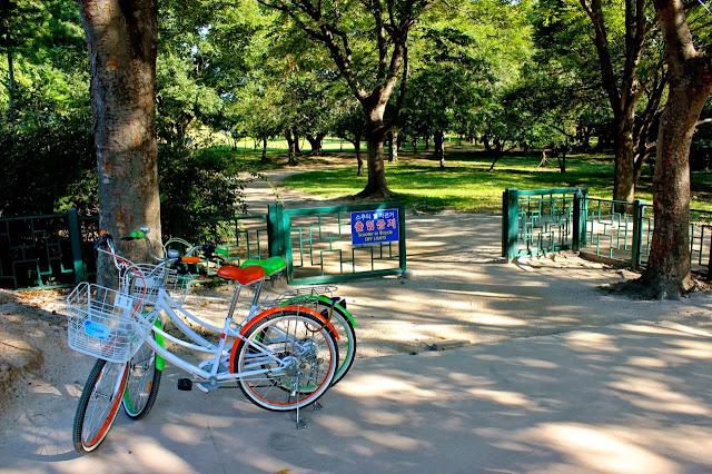 Rented bikes in Gyeongju