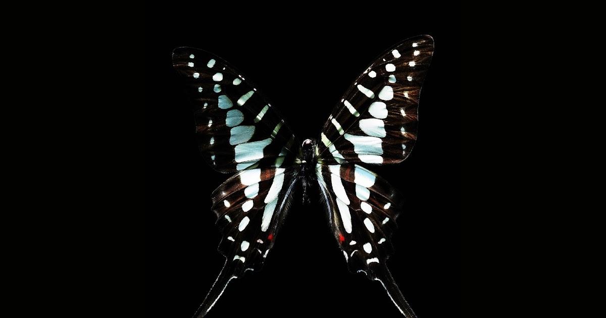 Black White Butterfly - Computer Screen Saver. PC Desktop ...