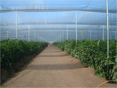 Casa sombra. Empresa AgroSanCristobal