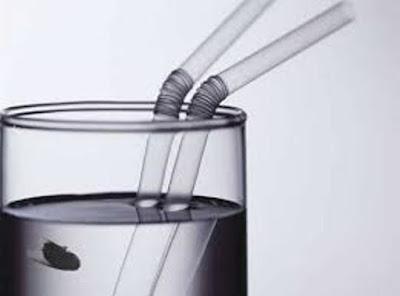 Penjelasan ilmiah hadits Nabi tentang lalat yang jatuh ke air minum