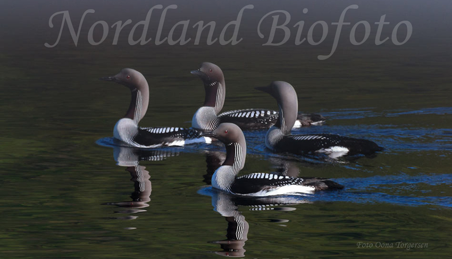 Nordland Biofoto