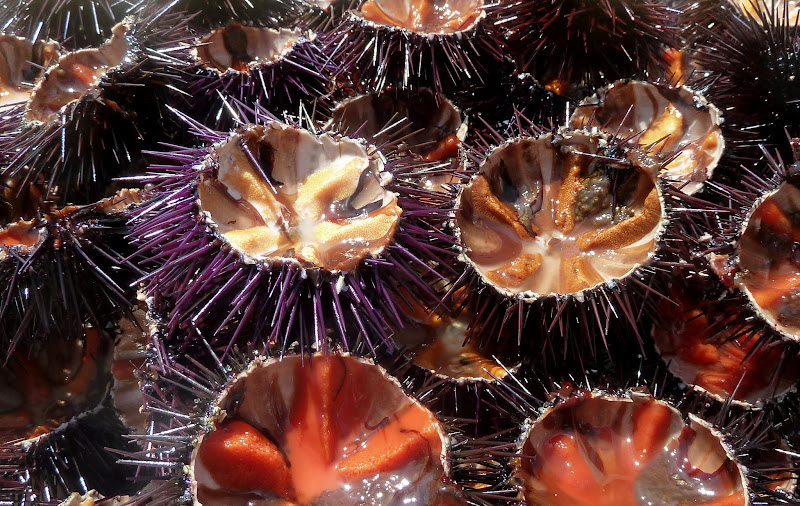 Seeigel - in vielen Ländern am Mittelmeer gelten sie als Delikatesse.