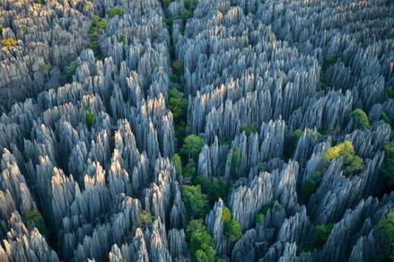 hutan shilin