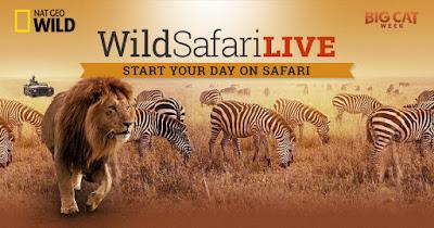 http://www.wildsafarilive.com/