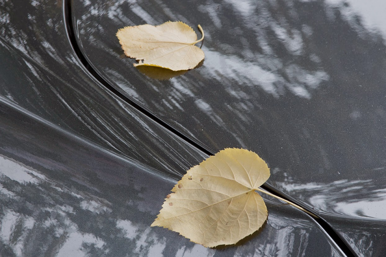 yellow leaves on grey car