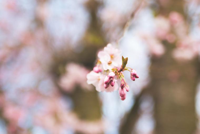 Shades of Spring