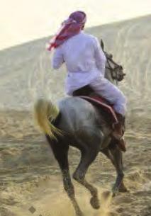 Kisah Suraqah bin Malik