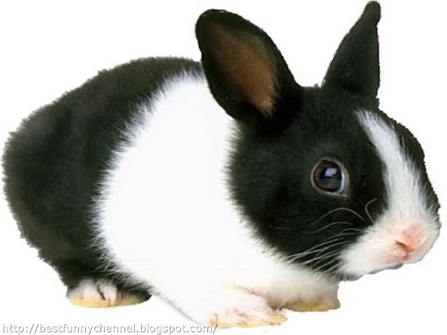 Funny small bunny.