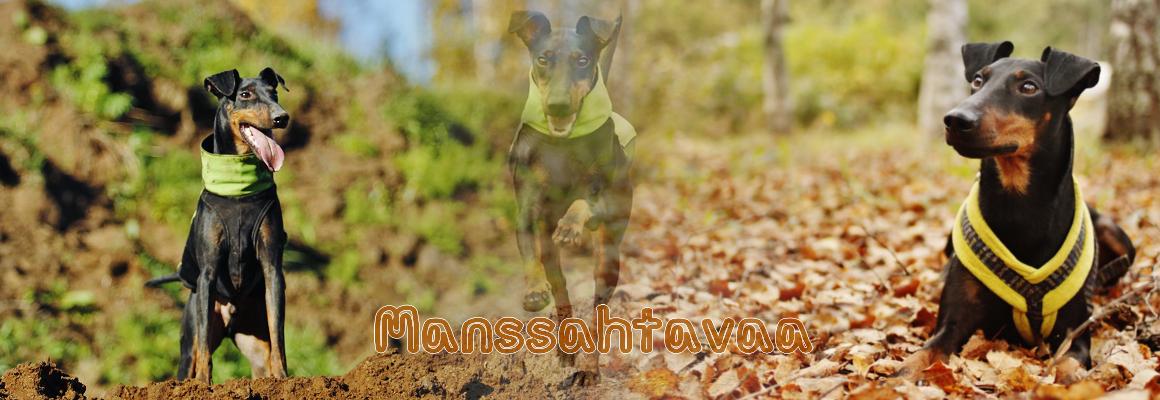 Manssahtavaa