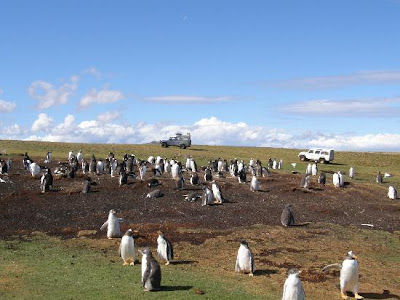 islas malvinas paisajes, turismo