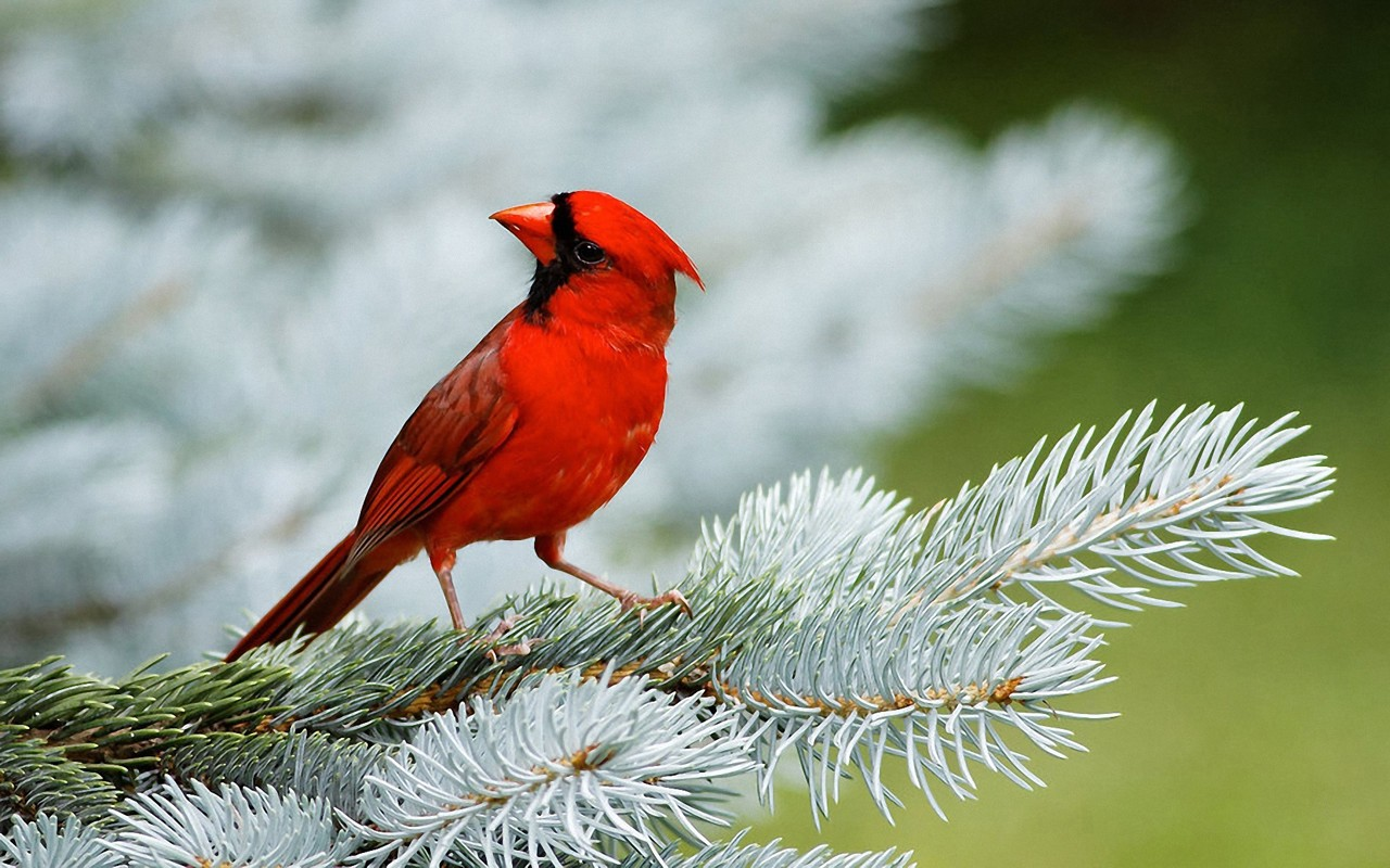 Hd Bird Wallpapers Animals Library