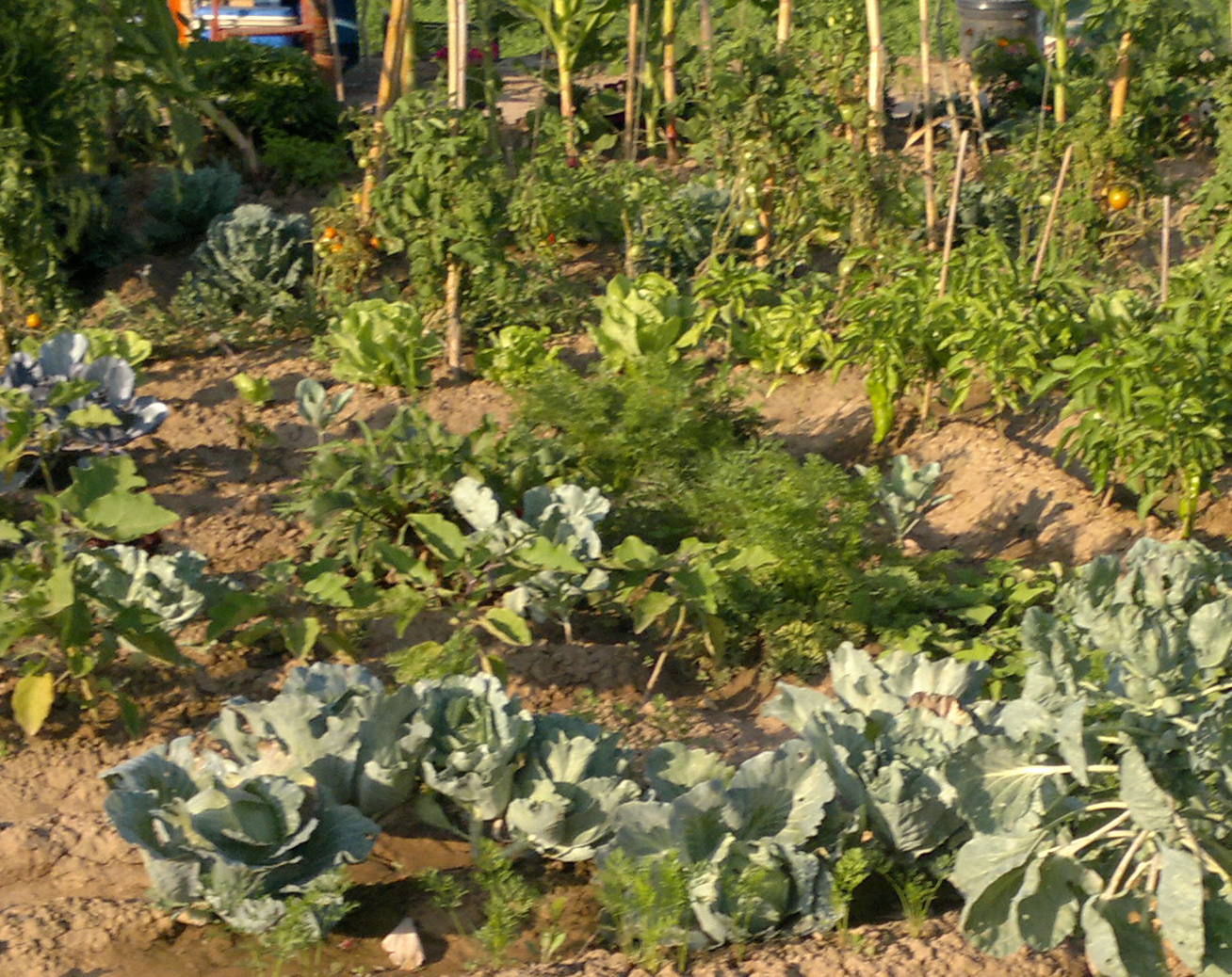 Crea tu jard n nitratos en hortalizas for Crea tu jardin