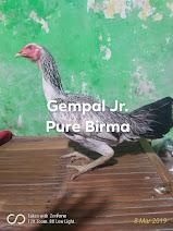 Indukan Gempal Jr