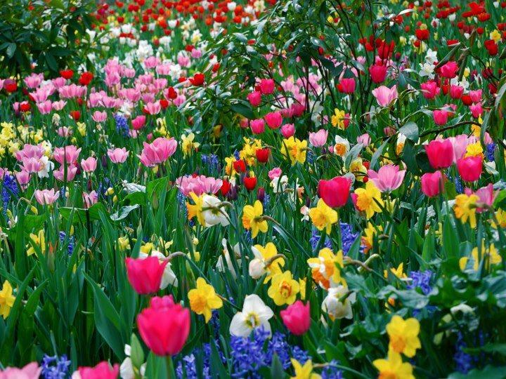 flores no jardim de deus : flores no jardim de deus:Jardim de bênçãos: Nossa vida: Jardim de Deus (Precisamos cuidar do