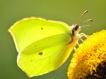 Blomster som tiltrekker seg sommerfugler