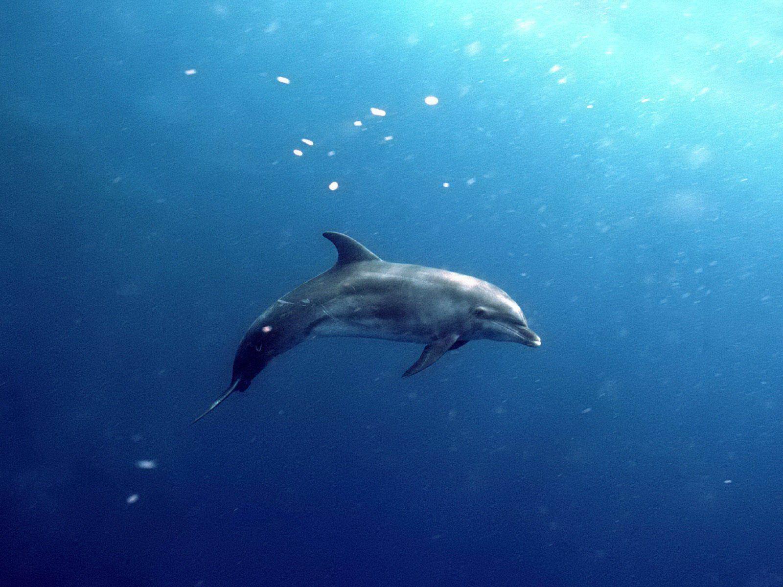 http://4.bp.blogspot.com/-QyzbPuKWY4U/UBVChX9HdpI/AAAAAAAAAYo/iNue4GHUSc0/s1600/dolphinpictures+%25286%2529.jpg