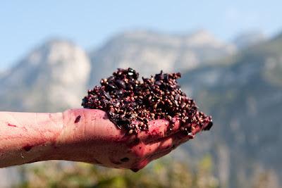 Foradori Teroldego Biodinamico Trentino
