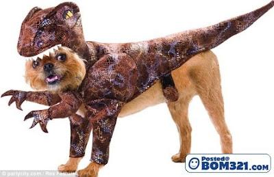 Kostum Menarik Untuk Si Anjing