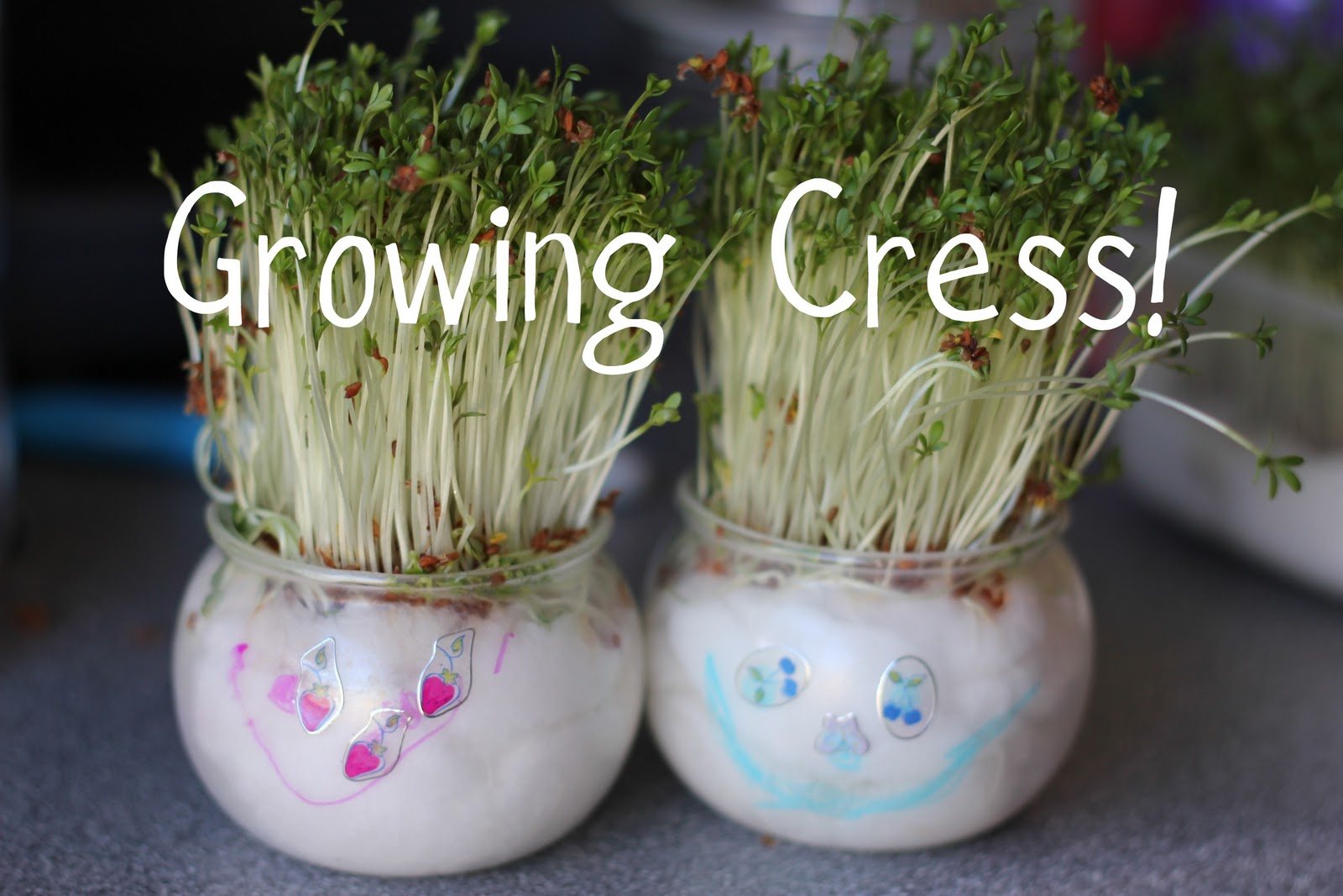 Fun With Easy Indoor Growing Project And Learning Lots