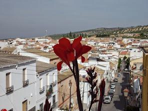 Flores en el pueblo.