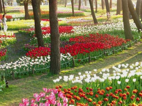 Todo informacion paisajes llenos de plantas hermosas for Jardines naturales