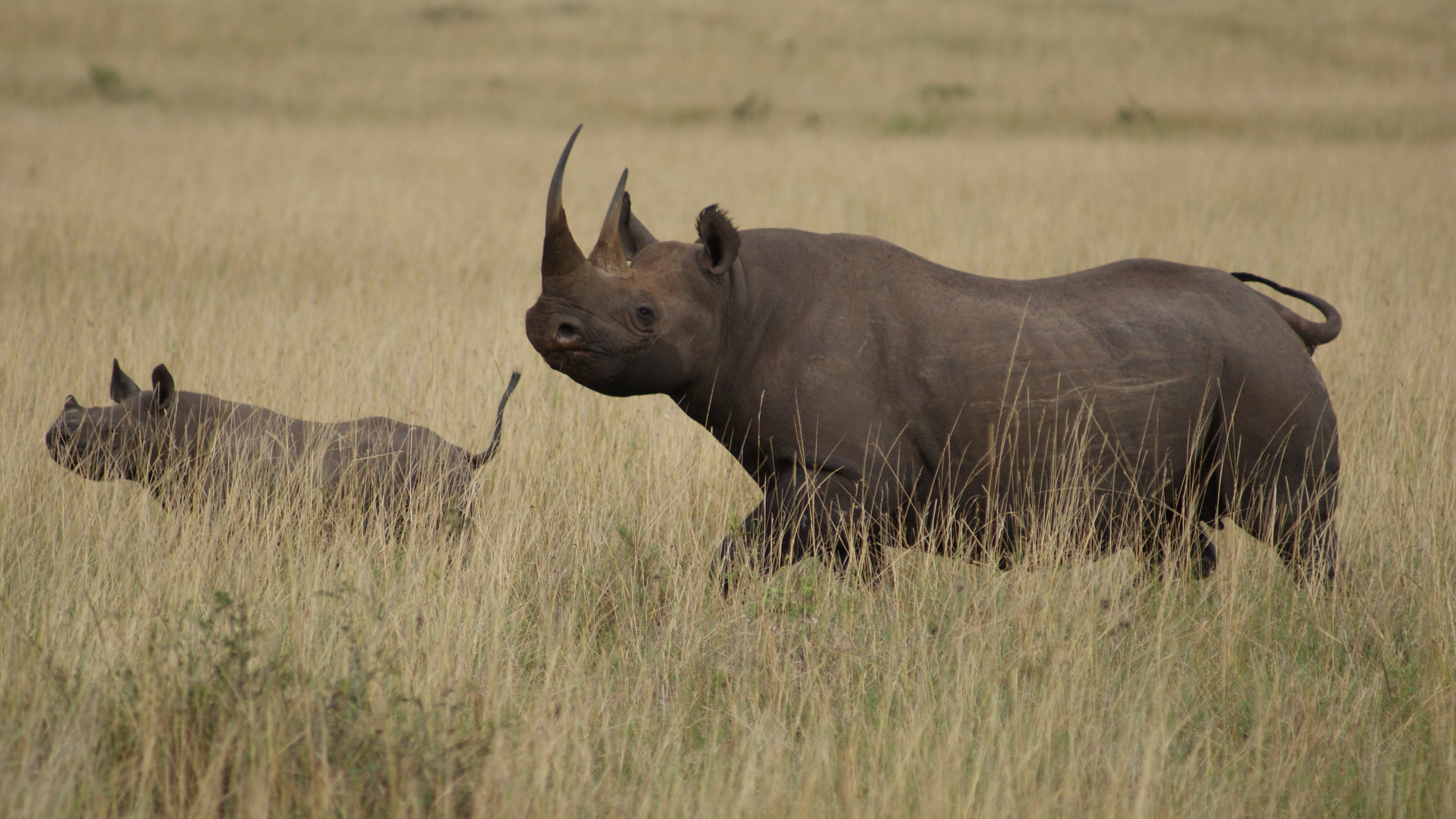 O Maia Masai Mara
