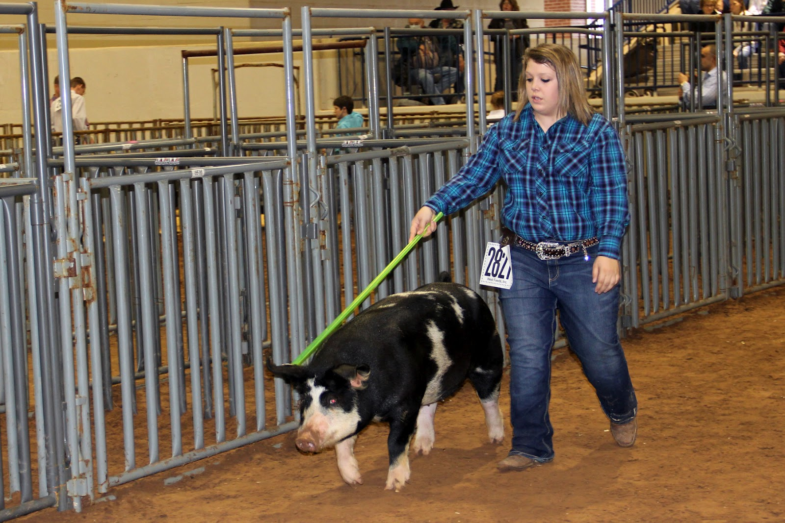 http://4.bp.blogspot.com/-R-9nHCP3Jqk/Tz68WptbZBI/AAAAAAAABqs/jtUxHQgQzg8/s1600/County+Livestock+Show+swine+and+steers+2012+041+adj4x6.jpg