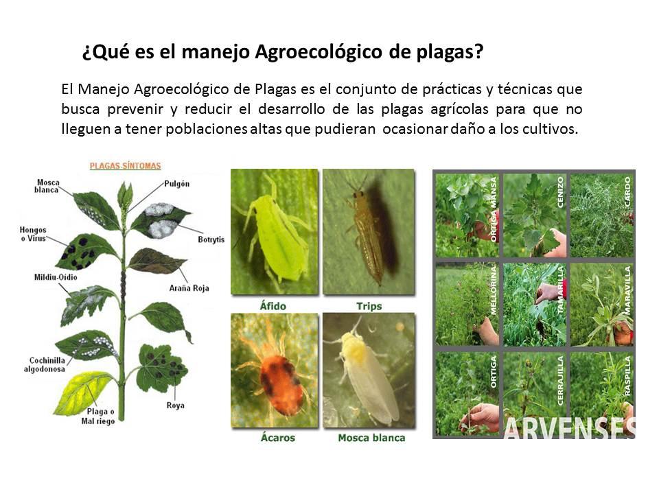 Visi n agroecol gica manejo agroecol gico de plagas for Que es una mesa de cultivo