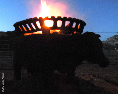 In the firepot: An accidental Bovine Appreciation Fire.