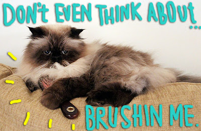 no-brush-cat