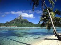 خلفية صورة نخلة على شاطئ رمل في البحر