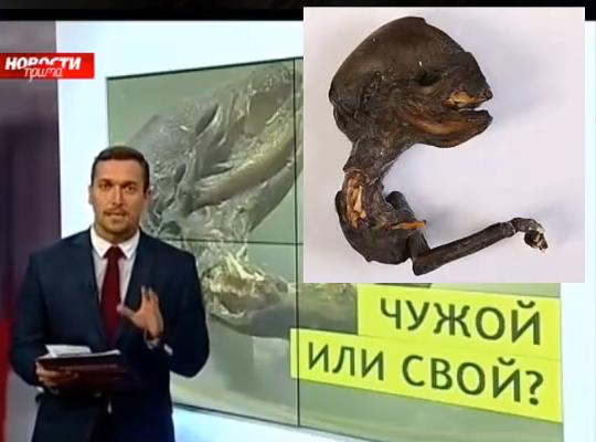 Small Alien Creature Found In Russia 2015, UFO Sighting News
