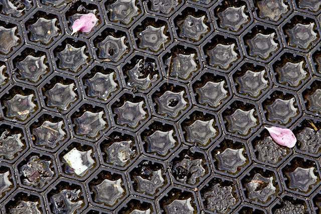 two pink petals on a black pattern